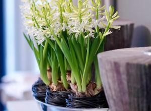 Pflanzen Für Dunkle Ecken pflanzen für dunkle ecken zuhausewohnen
