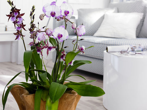 orchideen f r alle r ume zuhausewohnen. Black Bedroom Furniture Sets. Home Design Ideas