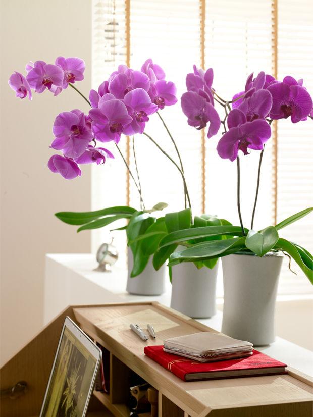 Orchideen 14