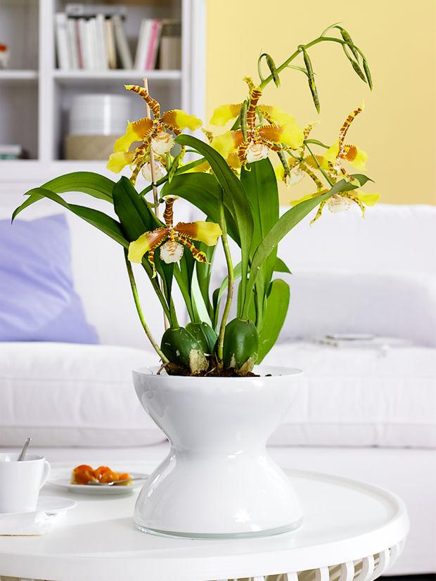 orchideen dekorieren orchidee tischdeko kommunion bro deko k18 01 und tuschend echt u2013. Black Bedroom Furniture Sets. Home Design Ideas