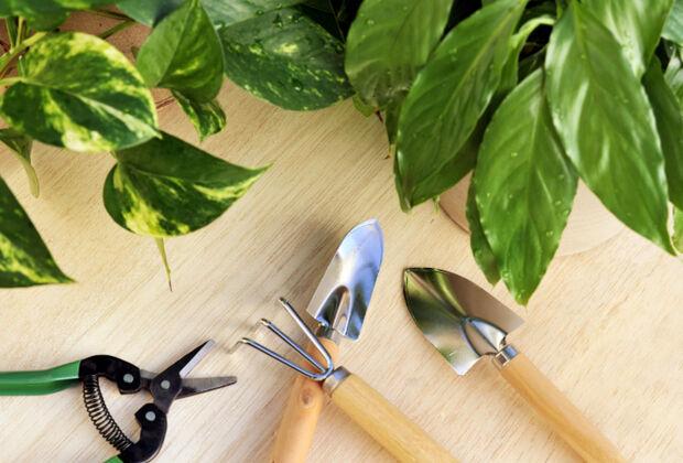 Grunpflanzen Fur Jeden Wohnstil Zuhausewohnen