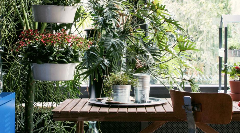 gr npflanzen im zimmer so werden sie in szene gesetzt. Black Bedroom Furniture Sets. Home Design Ideas