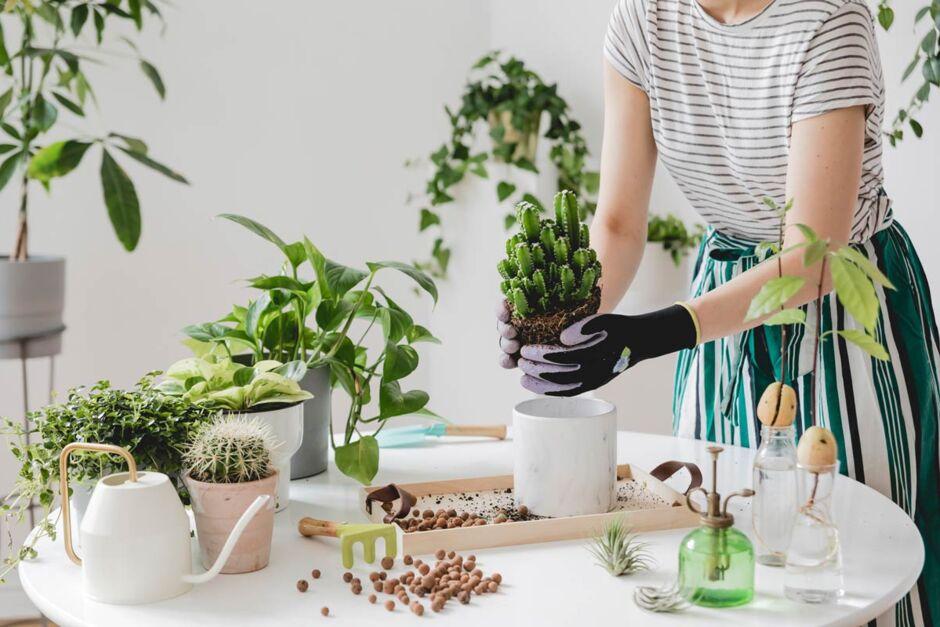 Pflanze: zu viel Wasser - was tun bei übergossenen