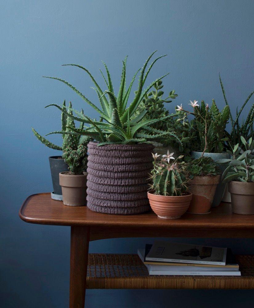 Gr npflanzen im zimmer so werden sie in szene gesetzt for Deko grunpflanzen