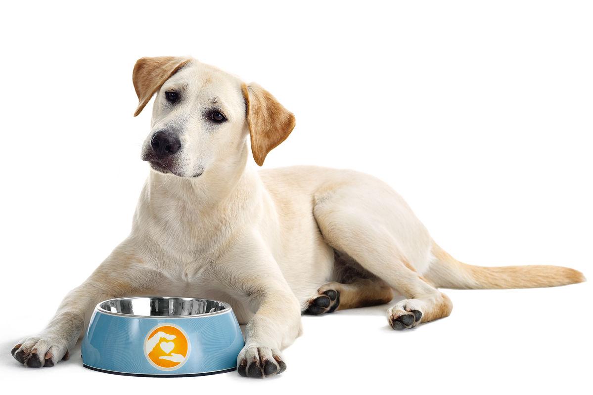 Accessoires f r katz und hund zuhause wohnen for Deko accessoires wohnen