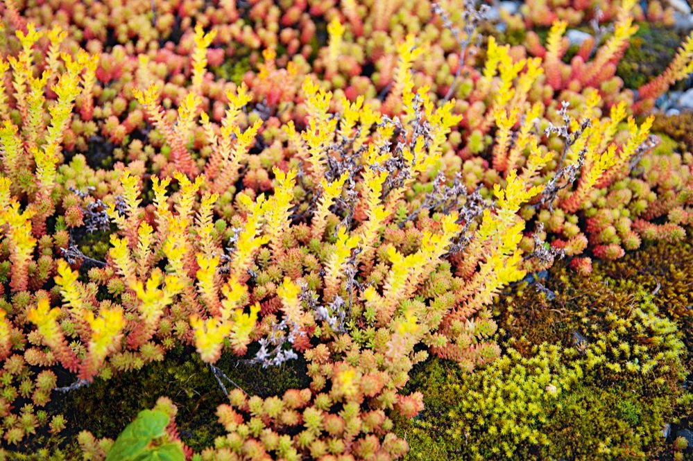 Herbstgarten November