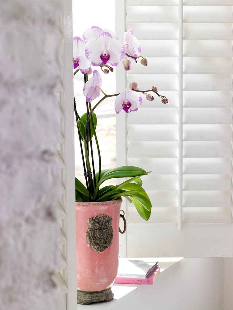 Orchideen 4
