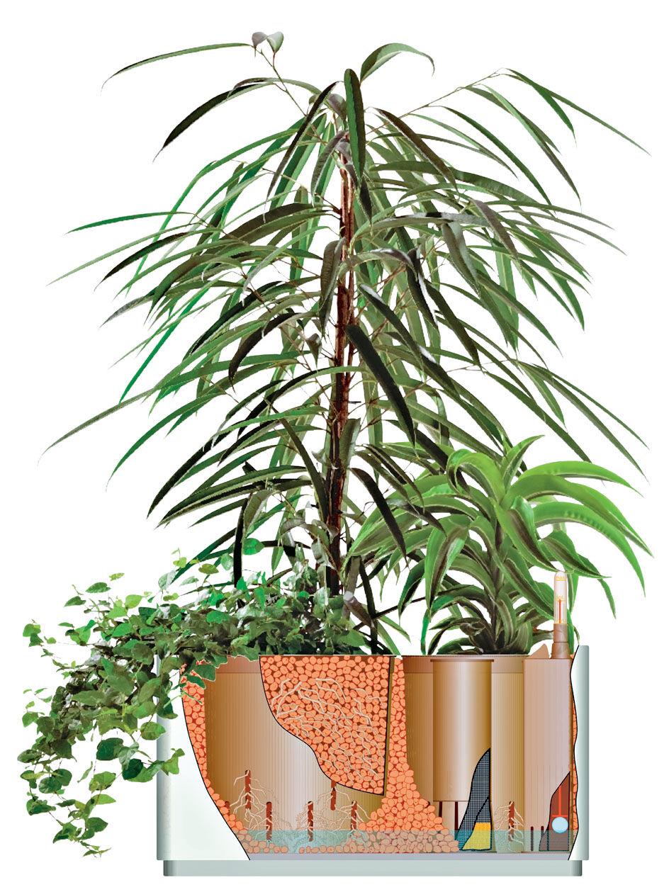 Tipps für Grünpflanzen