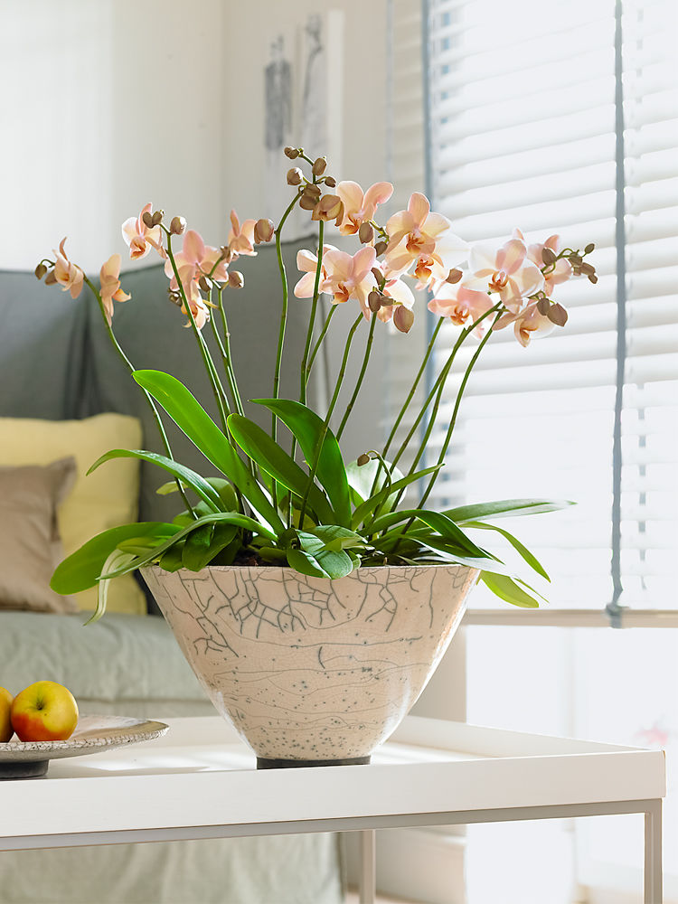 Orchideen 5