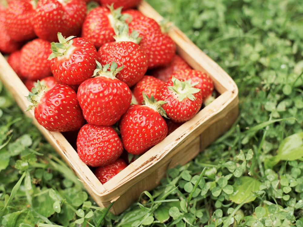 Erdbeeren im Korb