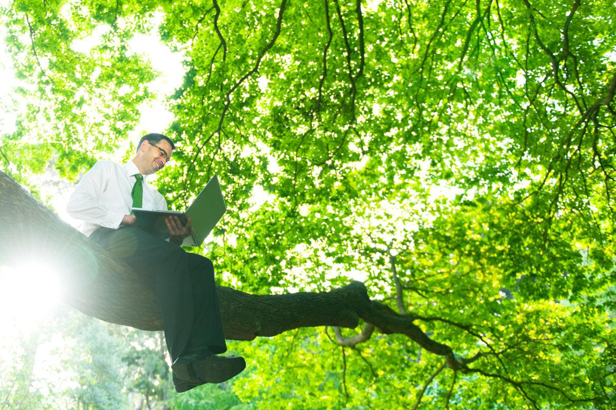 Ein Mann arbeitet in den Wipfeln eines grünen Baumes - Diese Arbeitsplätze passen zu Ihnen