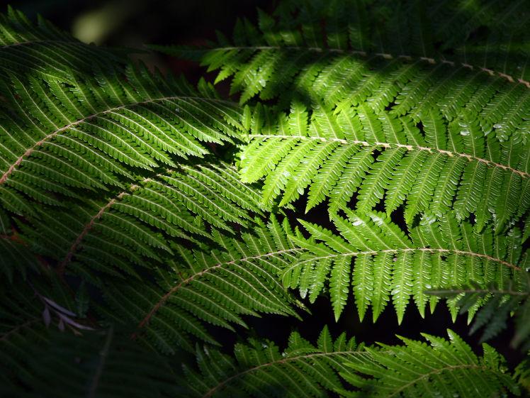 Gartenpraxis schattenpflanzen zuhause wohnen - Schattenpflanzen garten ...