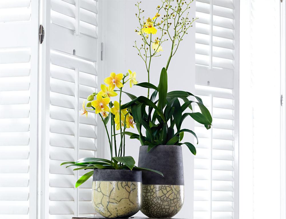 orchideen f r alle r ume zuhause wohnen. Black Bedroom Furniture Sets. Home Design Ideas