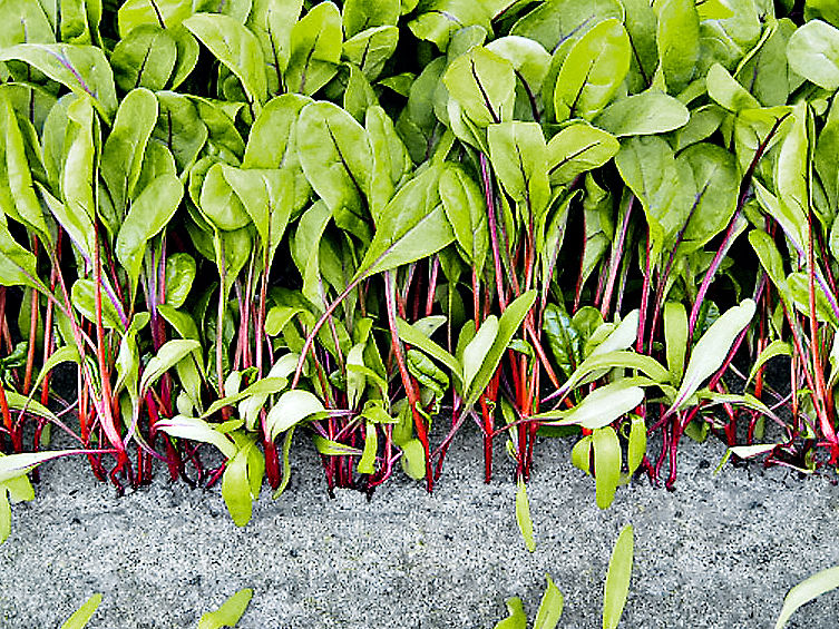 Gem se selber pflanzen zuhause wohnen for Pflanzen zuhause