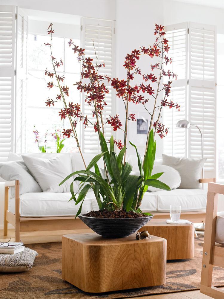 rendezvous mit orchideen zuhause wohnen. Black Bedroom Furniture Sets. Home Design Ideas